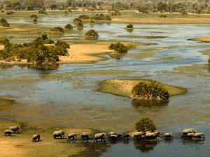 Okavango Delta game viewing from the air-credit WS (use wherever)